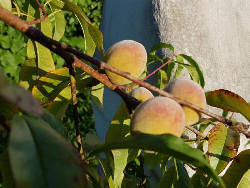 Fruchtige Hingucker